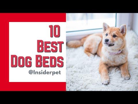 10-best-dog-beds