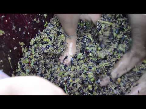 GRAPE STOMP! Wine Business Management students learn to make wine the old world way.