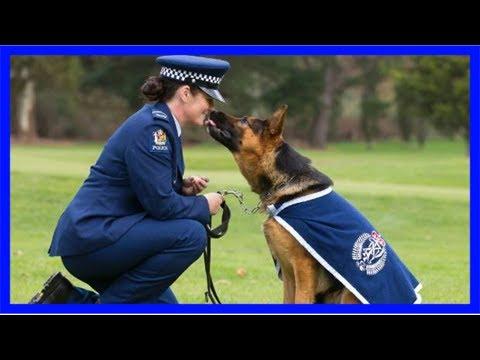 Veteran wellington police dog and tv star hades dies