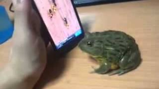 FROG Vs My Tablet Computer