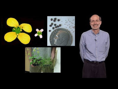 Richard Amasino (U. Wisconsin-Madison, HHMI): Genetics in the Classroom