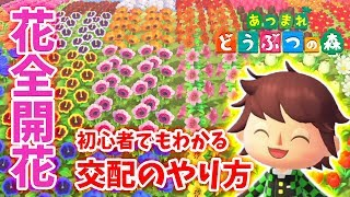 【あつ森】初心者でも分かる花の交配のやり方!!全種類の花の交配ルートをまとめま…