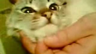Kotek mowi ludzkim glosem