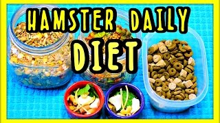 SYRIAN Hamster Diet | OLD