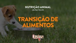 Nutrição Animal com Ana Chizzotti - Transição de Alimentos