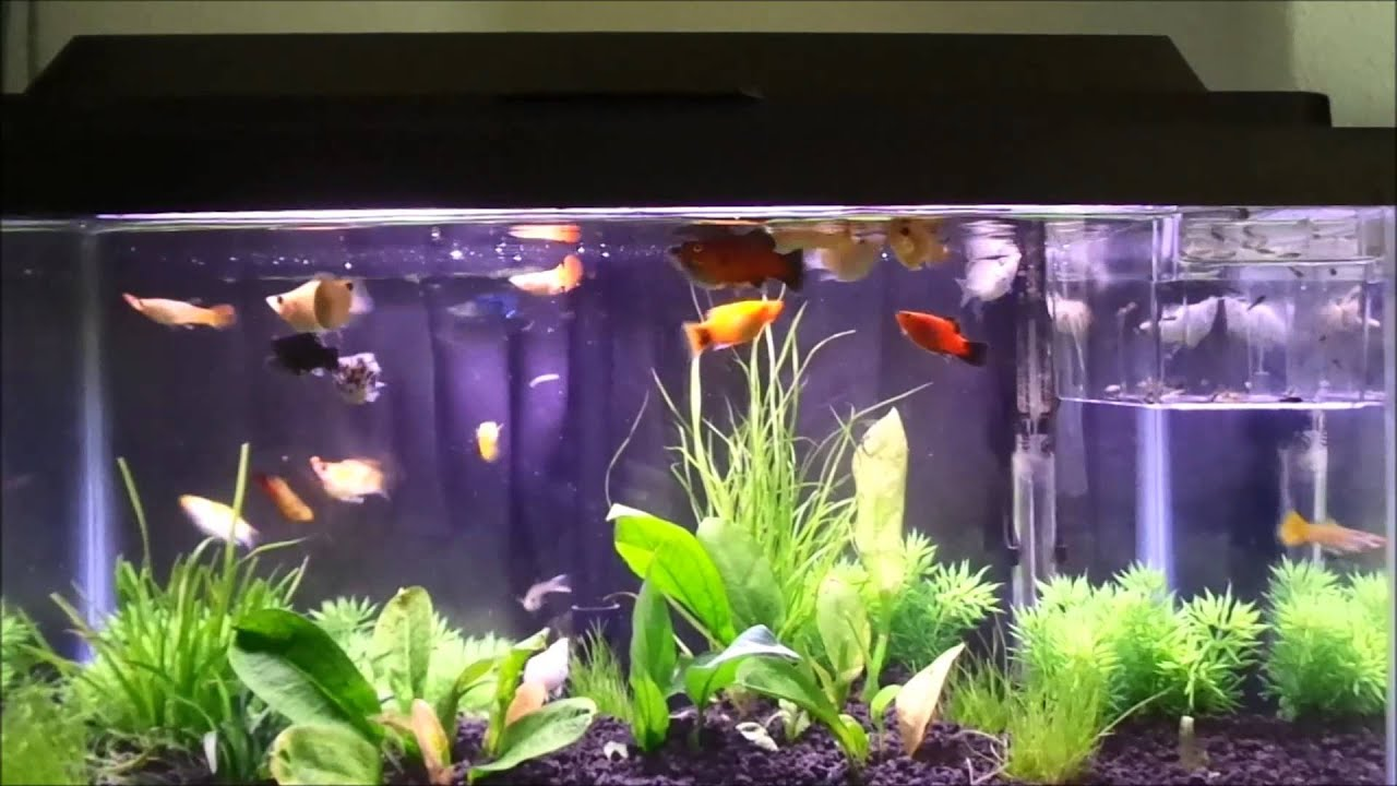 My Tropical Fish Aquarium & Newly Born Baby Fish