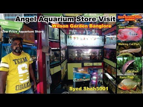 Angel Aquarium Store Banglore Wilson Garden #Fish Market