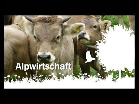 ALPWIRTSCHAFT