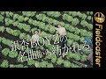 銀杏BOYZ峯田和伸の小説が映画化!『いちごの唄』
