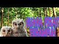 Suara Pikat Burung Kecil Ketakutan Sangat Ampuh  Mp3 - Mp4 Download