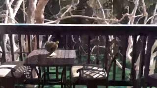 Bird X Balcony Gard Ultrasonic Bird Repeller Review