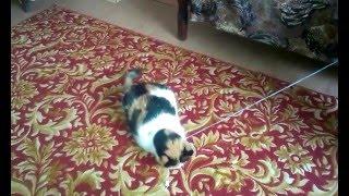 10 лет кошке, а она как ребенок