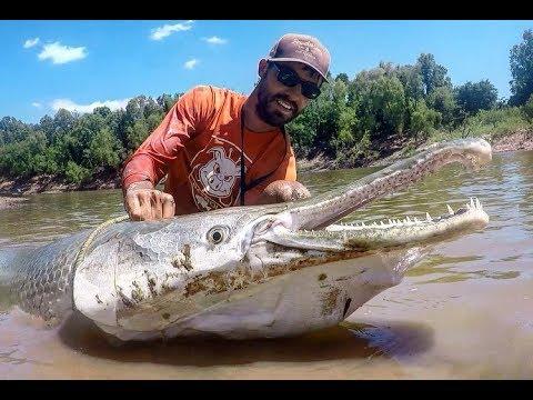 MONSTER Alligator GAR Fishing In TEXAS! INSANE FIGHT!