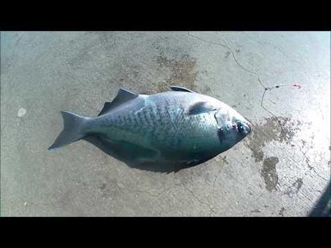 FISHING HUNTINGTON BEACH PIER