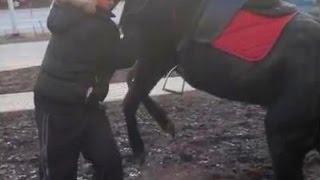 Пьяный наездник,лошадь брезгует ))