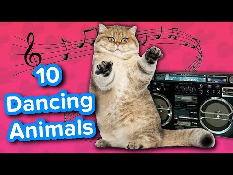 Ten Dancing Animals // Funny Animal Compilation