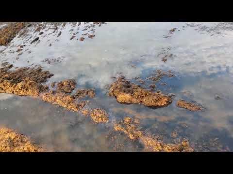 Черное море 6.30 утра 25.07.2018 - вид уборки пляжа