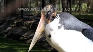 A Lesser Adjutant Stork, Egret And A Rosy Pelican