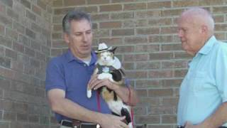 Famous Pet Star - Princess Sugar Pie Performs - Famous Cat Tricks! Rescued Feral Kitten!