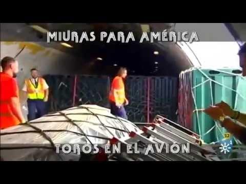 Miuras Para América, Toros En El Avión  Parte 2-2