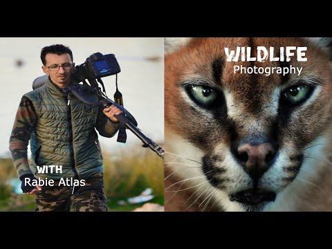 Morocco Wildlife  Documentary ( 4K )         الحياة البرية  -  المغرب