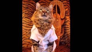 Супер Модный кот Лоренцо(ПОДПИСЫВАЙТЕСЬ на канал впереди будет еще много интересного и КРАСИВОГО. Вот еше ИНТЕРЕСНОЕ видио)) ----..., 2015-12-25T18:41:43.000Z)