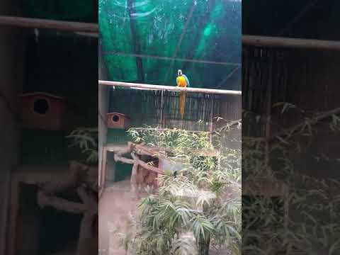 Delhi zoo videos(3)