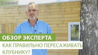 Как правильно пересаживать клубнику?(В этом видео наш эксперт расскажет, как правильно пересаживать клубнику. Купить саженцы клубники можно..., 2015-10-16T09:41:33.000Z)