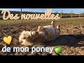 Des Nouvelles De Mon Poney : Déménagement, Castration... video