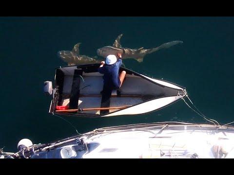 Shark Infested Art Gallery - Free Range Sailing Ep 12