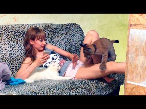 Порно с животными, зоофилия, зоо секс видео онлайн 24