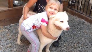 Контактный зоопарк собачки Хаски и лошадки Развлечение для детей Entertainment for children zoo
