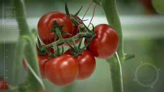 농식품 ICT 융복합 확산사업(스마트 팜 사업) 홍보 …