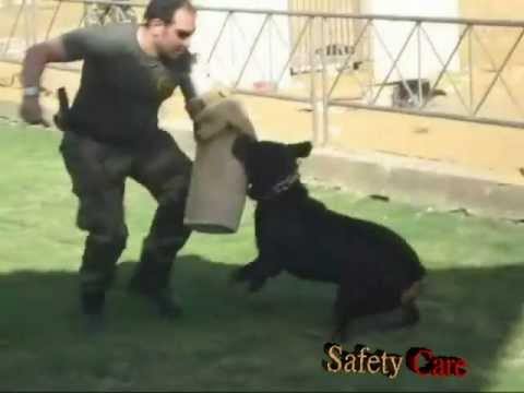 Safety Care Dog Training In Egypt 10 Youtube