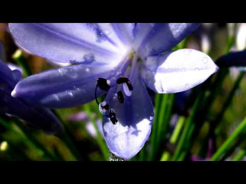 Spring Rain Smiley Botanical Gardens, Relaxing Music, Enjoy Nature, Beautiful Flowers
