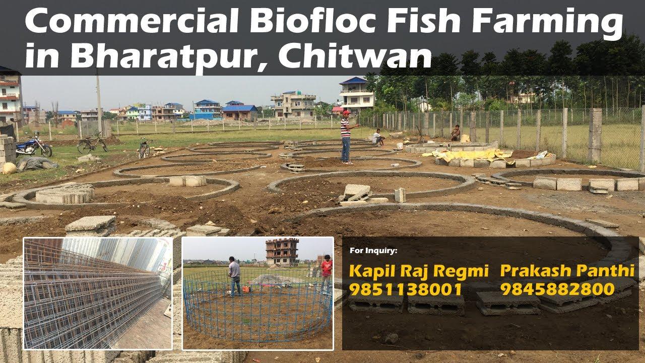 Biofloc field design in Bharatpur, Chitwan, Commercial Biofloc Fish Farming  Setup