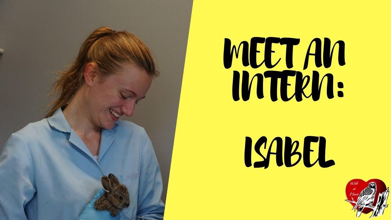 Intern and Volunteer Corner | Wild at Heart Refuge Centre
