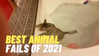 Best Animal Fails of 2021