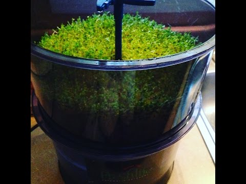 Sprouting jar vs automatic sprouter/ Field Trip (pt 1)