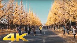 Ginkgo trees road in Gaiemmae, Tokyo - Long Take【東京・外苑前/紅葉】 4K