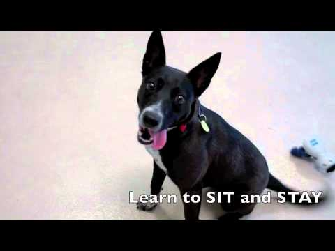 Logo a Border Collie: Australian Cattle Dog Mix available for adoption at the Wisconsin Humane Society