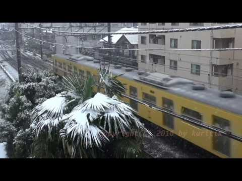 Japan Trip 2016 Tokyo Snow in November 24 is the first time in 54 years.
