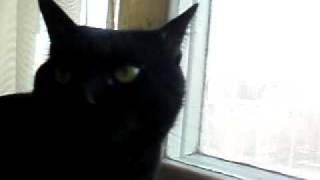 Обычный говорящий кот 01.MOV