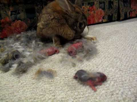 how to stop pet rabbits from digging