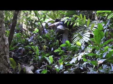 The Sumatra Jungle Trek with Charity Challenge