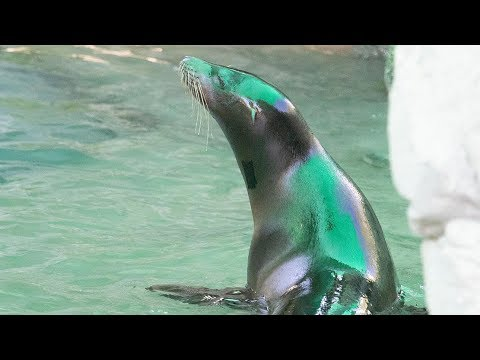 Audubon Zoo Welcomes Rescued Sea Lions