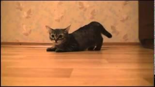 Прикол кот бежит
