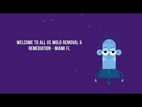 Expert Mold Removal and Remediation in Miami FL