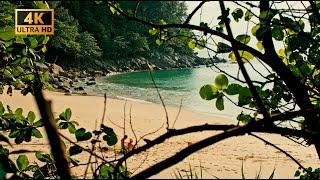 Пхукет сейчас Залезли в закрытый отель пляж близнец Карона история одного попугая и кофеек