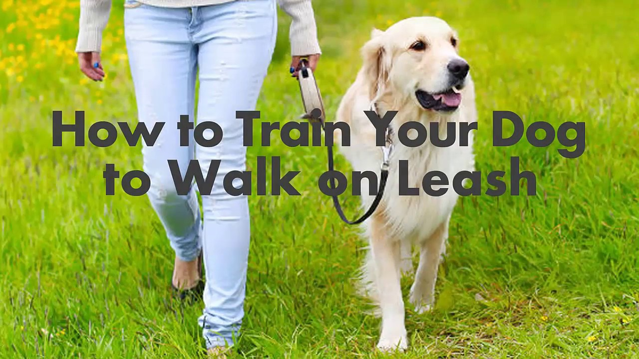 Train Dog To Walk Without Leash